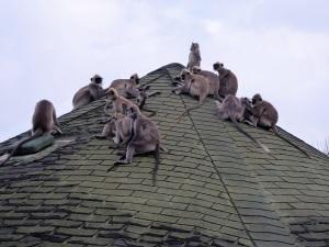 1371-parque-nacional-de-yala-lodge