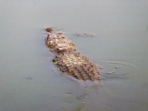 1375-parque-nacional-de-yala-charca-junto-al-lodge-cocodrilo