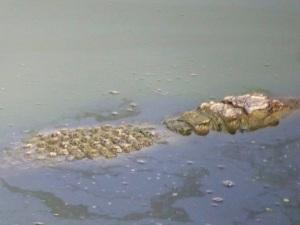 1376-parque-nacional-de-yala-charca-junto-al-lodge-cocodrilo