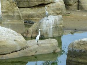 1388-parque-nacional-de-yala-charca-junto-al-lodge-garzas