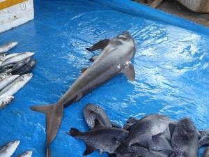 1513-koggala-venta-de-pescado