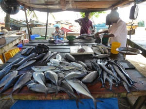 1522-koggala-venta-de-pescado