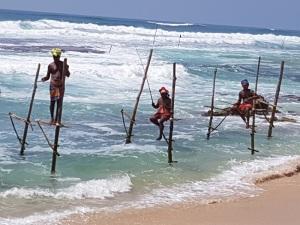 1539-koggala-pescadores-sobre-zancos