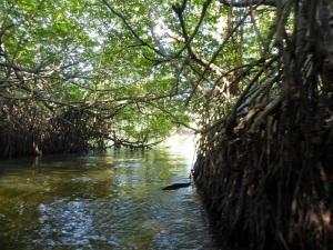 1590-paseo-por-rio-y-laguna-madu