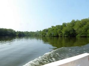 1591-paseo-por-rio-y-laguna-madu