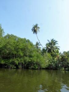 1592-paseo-por-rio-y-laguna-madu