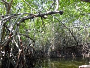 1600-paseo-por-rio-y-laguna-madu
