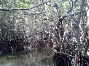 1603-paseo-por-rio-y-laguna-madu