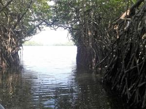1607-paseo-por-rio-y-laguna-madu