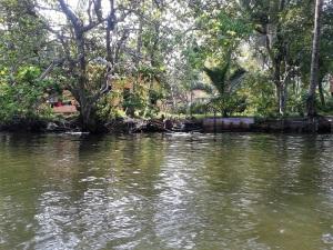 1631-paseo-por-rio-y-laguna-madu