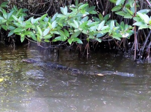 1662-paseo-por-rio-y-laguna-madu-varano-acuatico