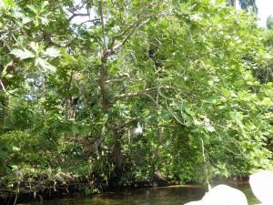 1678-paseo-por-rio-y-laguna-madu