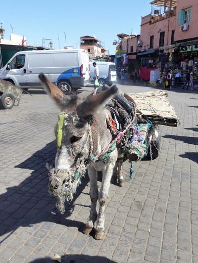 253. Marrakech. Zoco