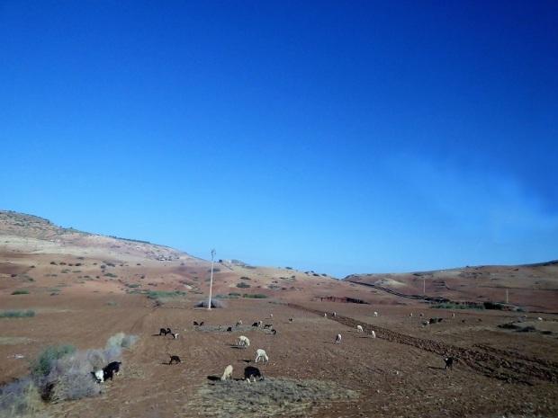 384. Hacia el desierto