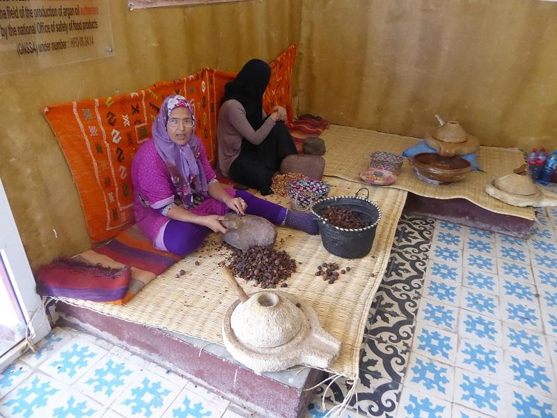 411. Obtención de las semillas del fruto del argán para obtener después el aceite.