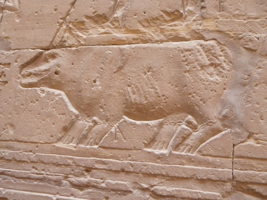298. Edfu. Templo de Horus