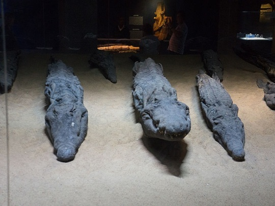 393. Templo de Kom Ombo. Museo cocodrilos