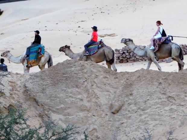 607. Camellos