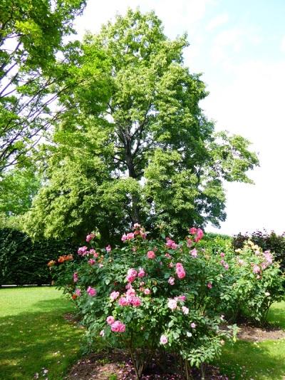 369. Schönbrunn. Jardines