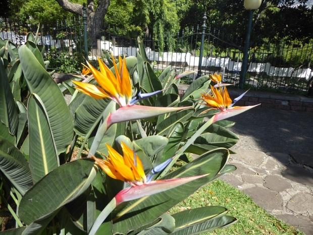 108. Funchal. Parque de Santa Catalina