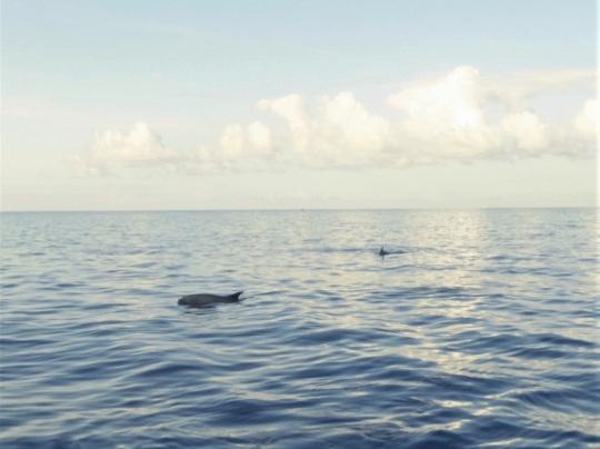 456. En el catamarán. Empiezan a asomar delfines