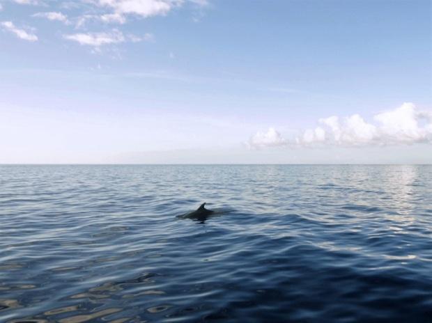 457. En el catamarán. Empiezan a asomar delfines