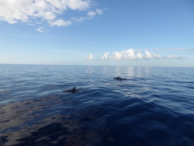 463. En el catamarán. Delfines