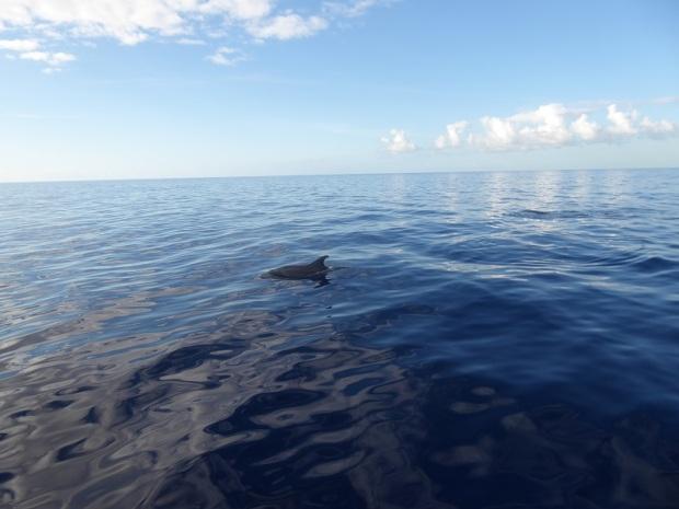 465. En el catamarán. Delfines
