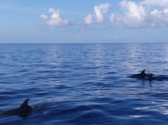 471. En el catamarán. Delfines