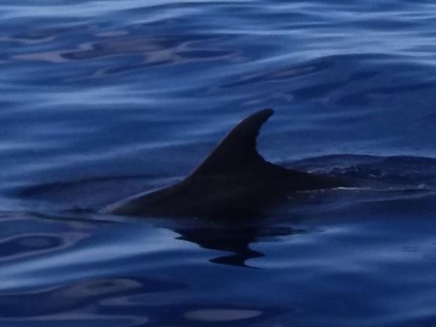 472. En el catamarán. Delfines