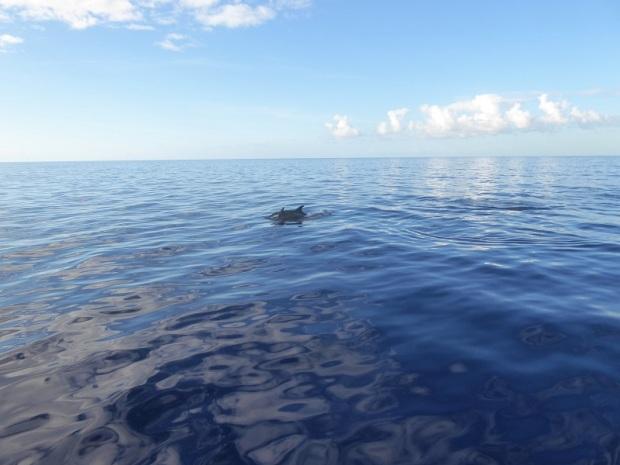 476. En el catamarán. Delfines