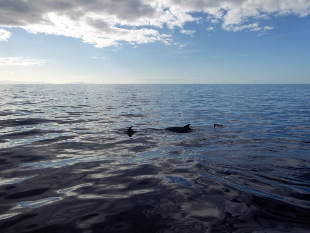 479. En el catamarán. Delfines