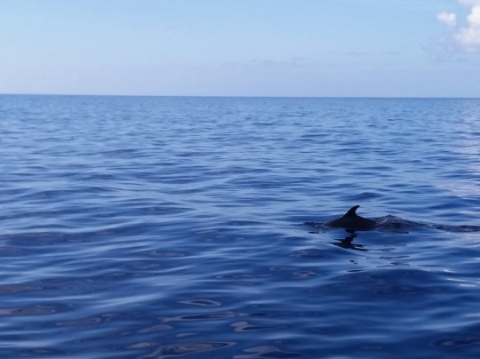 481. En el catamarán. Delfines