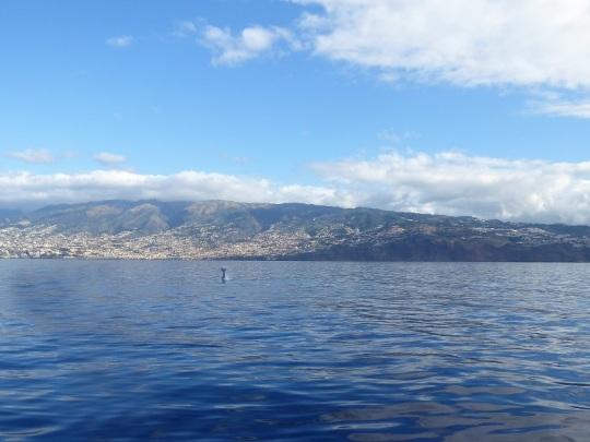 488. En el catamarán. Cachalotes