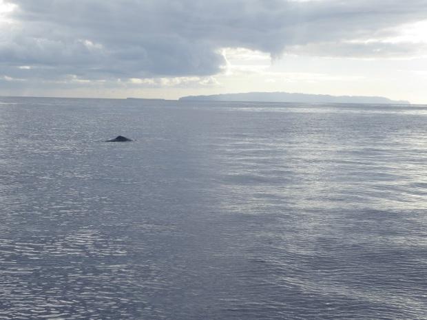 498. En el catamarán. Cachalotes